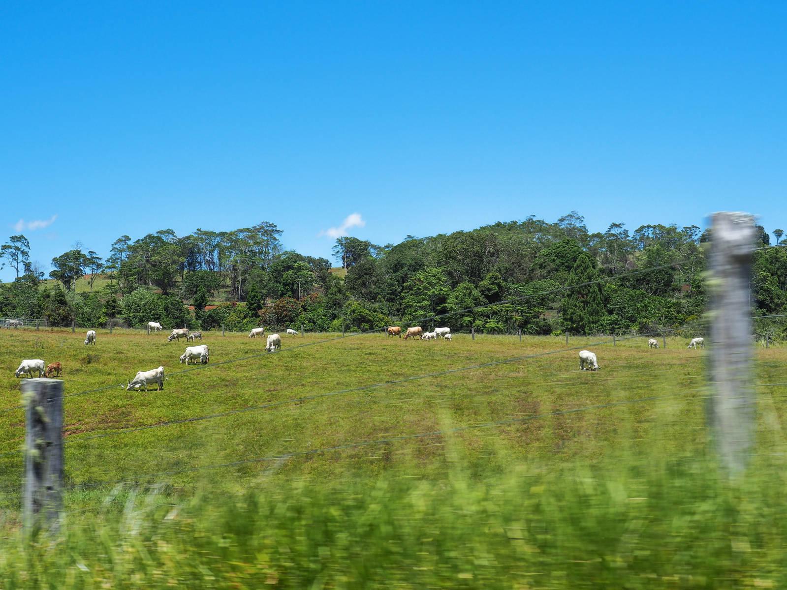 Vaches Tablelands