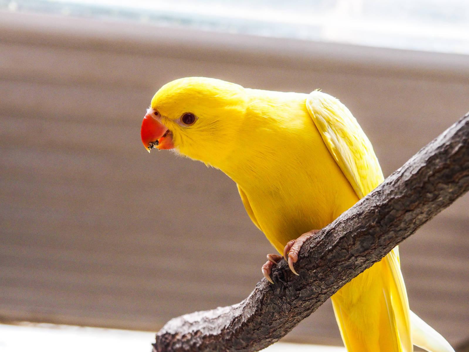 Canari Birdworld Kuranda